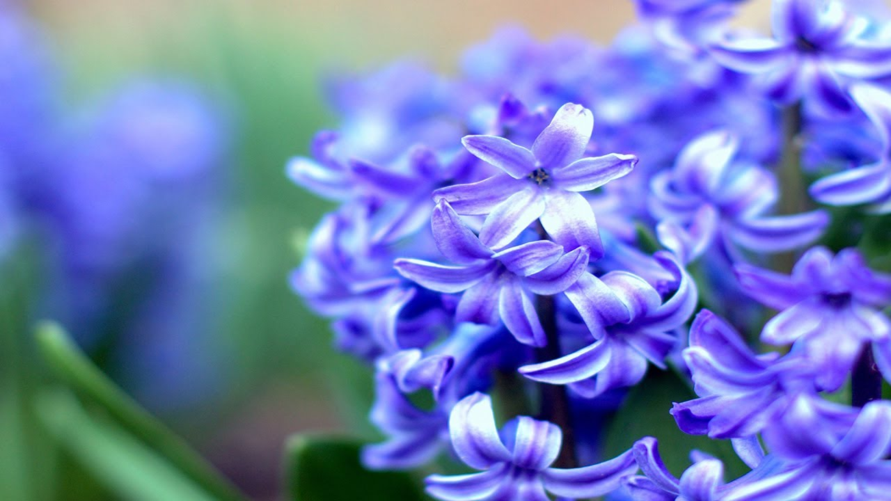 Top 10 most beautiful flowers in the world youtube mightylinksfo