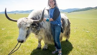The YAK FESTIVAL held in the ORKHON VALLEY, MONGOLIA is a truly fun...