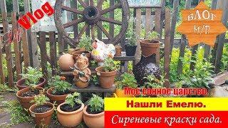 Мое сонное царство. Нашли Емелю. Сиреневые краски сада.
