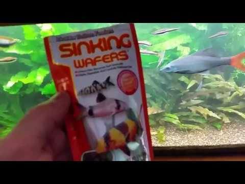 FEEDING Bottom Feeder Fish - TIP