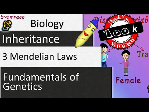 3 Mendelian Laws of Inheritance - Fundamentals of Genetics