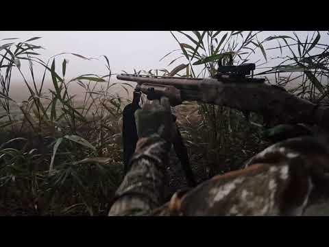 Turkey Hunting NC