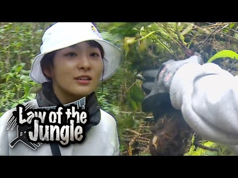 "Seung Hoon & Seul Gi Starts Digging After Hearing ""Sweet Potato""! [Law Of The Jungle Ep 321]"