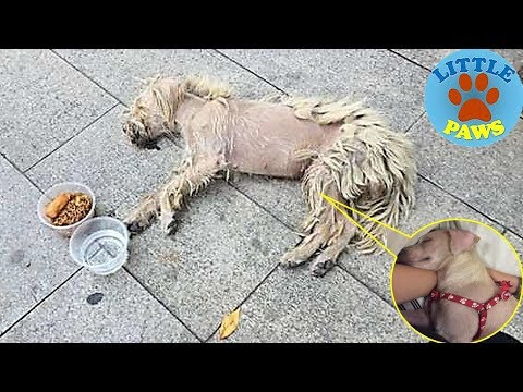 Sick & Starving Dog Who Lived on Streets Feels Love For The First Time
