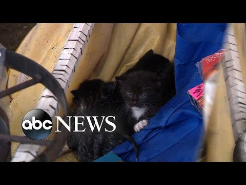Rescue efforts underway for animals after Hurricane Michael