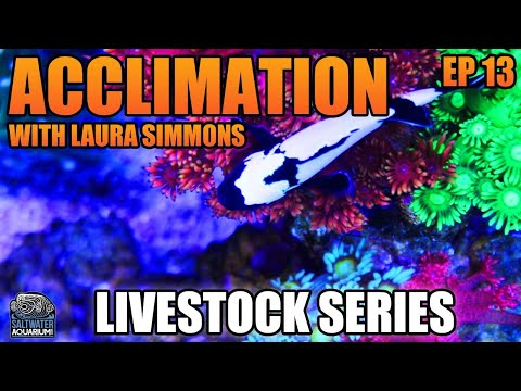 THE BEST Way To Acclimate Your Fish & Corals With Laura Simmons - Livestock Series