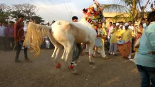 vuclip Horse Dance Indian Wedding Ceremony