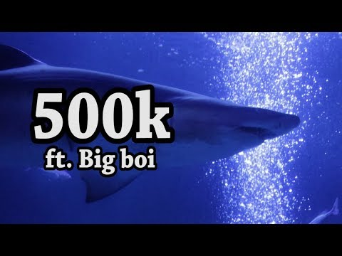 Having Drinks with a Shark and his friends to celebrate 500,000 Subscribers