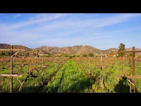 VALLE DE GUADALUPE WINERIES | DCHIC TV TRAVEL