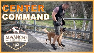 How to Teach Your Dog the Center Command!