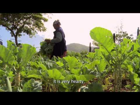 Facing Hunger Documentary
