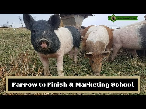 Farrow to Finish & Marketing School