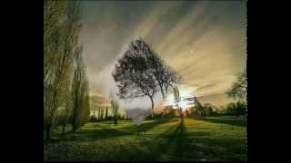 Ainars Mielavs Tumša nakte, zaļa zāle
