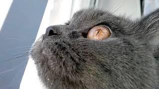 Мяуканье кошек которые бесят вашего кота или собаку - прикол над своим котом или собакой!