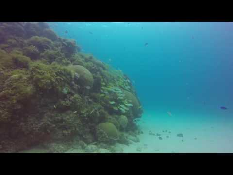 Jamaica reef Ocho Rios