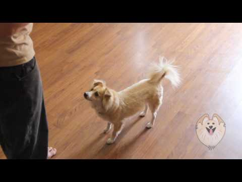 Baxter cutest dog tricks