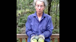 Acorn Squash With Brown Sugar And Butter @ Okra Paradise Farms 2013-07-03
