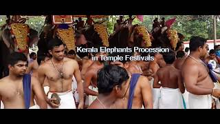 Elephants in Kerala Culture | Panchavadyam in Kerala Temple Festival Procession