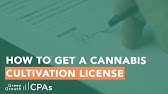 How to Get a Cultivation License to Grow 99 Cannabis Plants