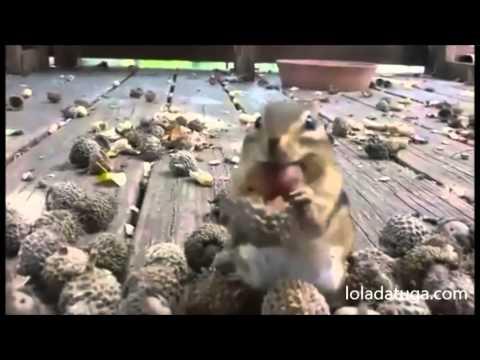 Squirrels feeding! Amazing!