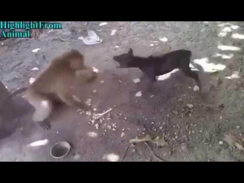 من يقدر على القرد مضحك humorous monkey