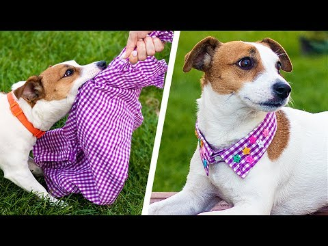13 Cute Dog Hacks! Paw-sitively Creative DIY Crafts