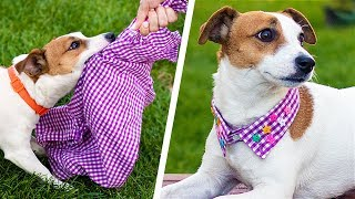 13 Cute Dog Hacks! Pawsitively Creative DIY Crafts