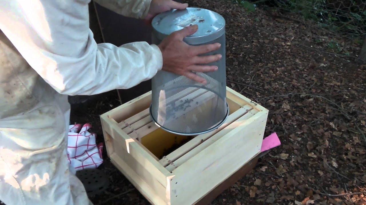Bijen Verplaatsen Naar Nieuwe Kast