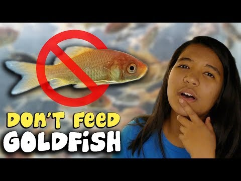 I NEVER Feed Goldfish To Turtles! - Feeding Turtles Live Fish