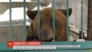 Закатовані голодом: на Запоріжжі намагаються врятувати 9 хижаків, яких забрали з приватного звіринця