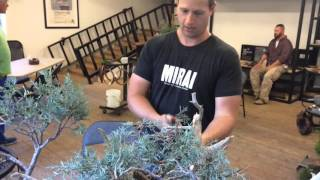 American Bonsai Master Ryan Neil