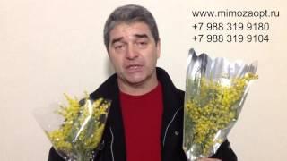 видео купить тюльпаны оптом
