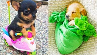 Baby Dogs - Cute and Funny Dog Videos Compilation #17 | Aww Animals