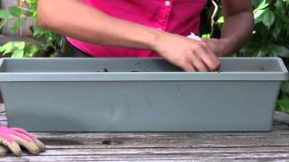 How to Grow Parsley in a Window Box : The Chef's Garden