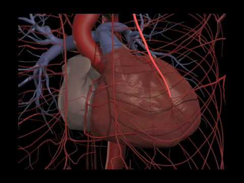 What Primal 3D anatomy software can do for you. www.primalpictures ...