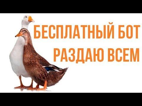 Бесплатная стратегия и бот для бинарных опционов Утка-Гусь!