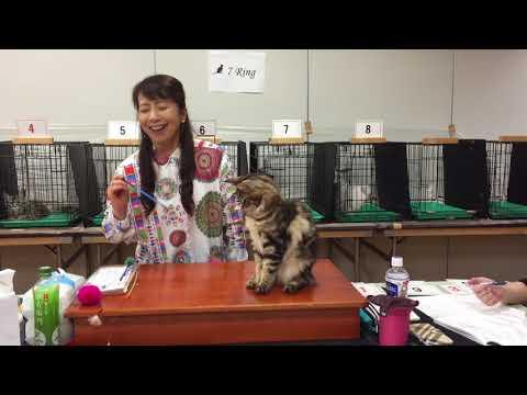Standing Lily @ TICA Region Show: Judge Hisae Tasaki's Ring