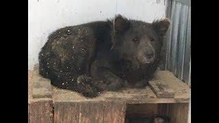 Медвебака — необычная собака из приюта. Но однажды туда пришла маленькая девочка с отцом
