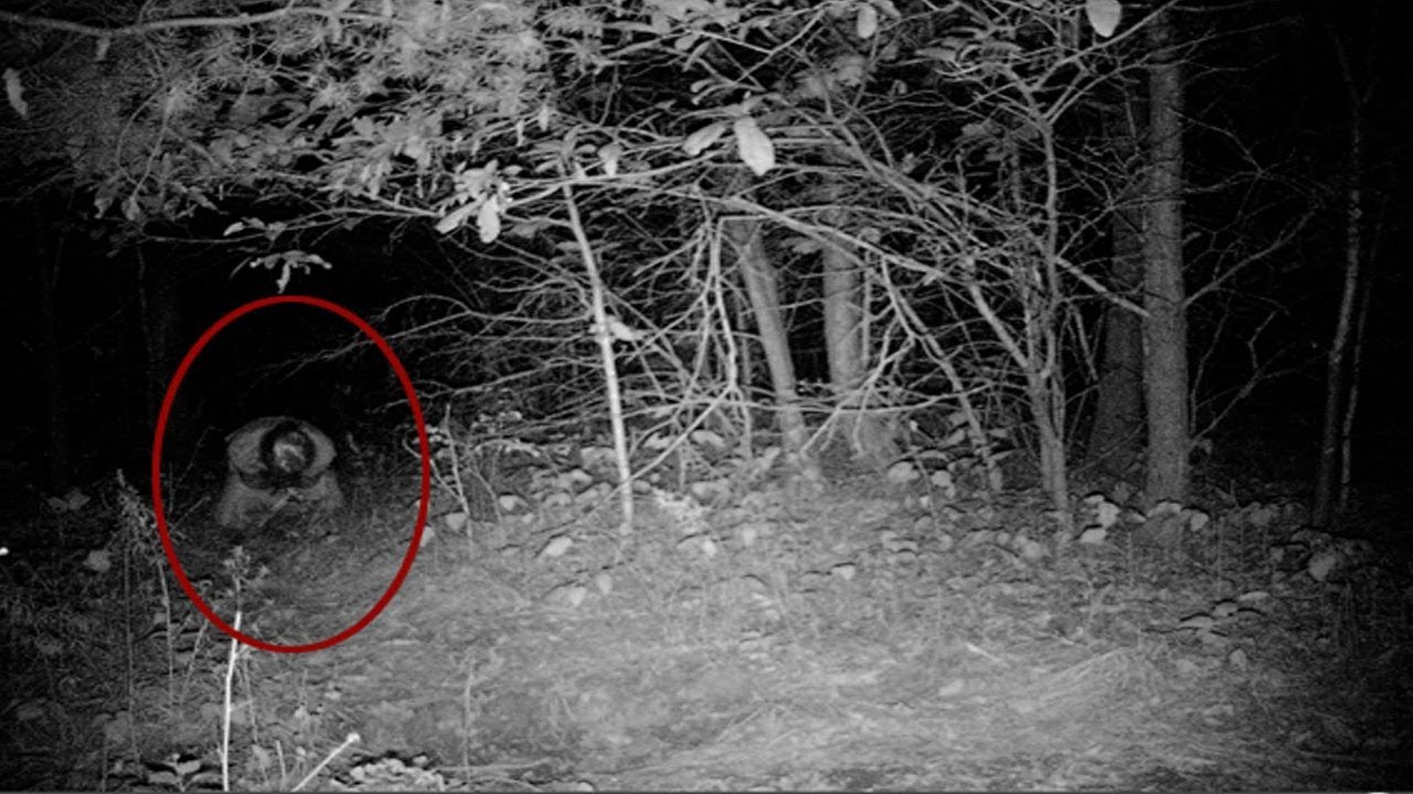 Image result for ghost in woods