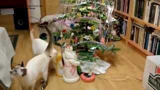 Улётное видео! Как тайские коты и кошки Новый Год встретили! Тайские кошки - это чудо! Funny Cats
