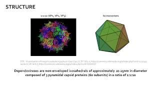Adeno Associated Virus (AAV)