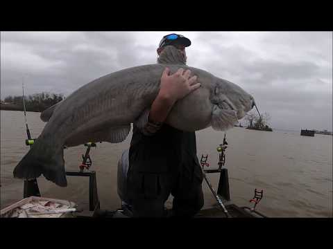 MONSTER FISH!-Catfishing shallow water