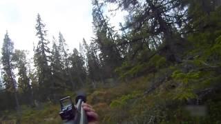 Moose Hunting in Sweden 2013