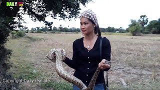 Amazing my Husband​​ Catch A Big Village  Snake On The Tree - Easy to Catch Python in Rice Fields