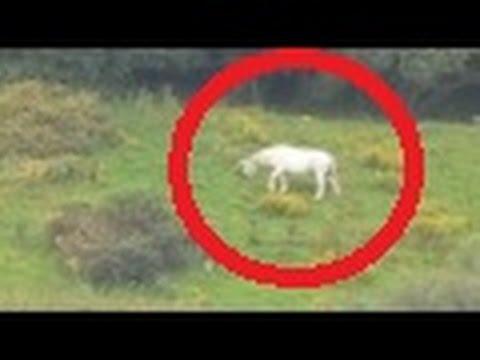 Unicorn sighting in England Amazing - YouTube  Unicorn sightin...