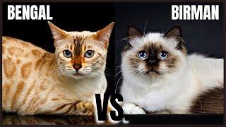 Bengal Cat VS. Birman Cat