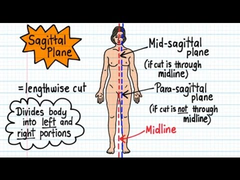 Anatomical Terminology - Drawn and Defined
