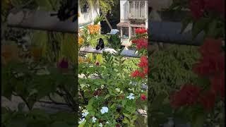 Attracting butterflies in my Garden
