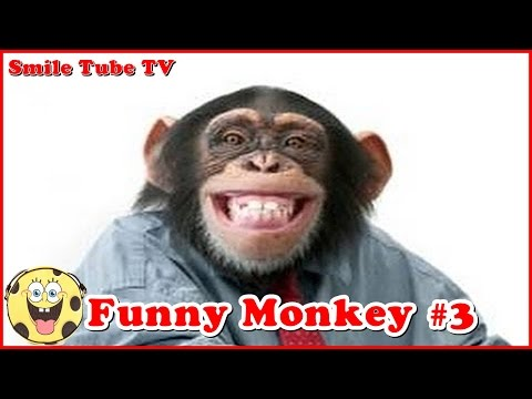 Mix Monkey laughing funny videos Compilation by Smile Tube TV #3