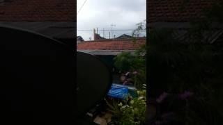 heboh penampakan naga di langit jogja setelah hujan